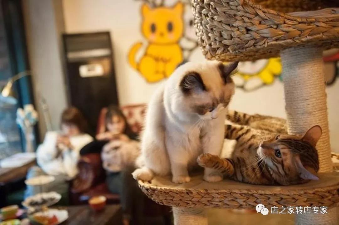 北京:儿童在猫咖餐厅被猫咬伤 家长诉餐厅索赔6万元